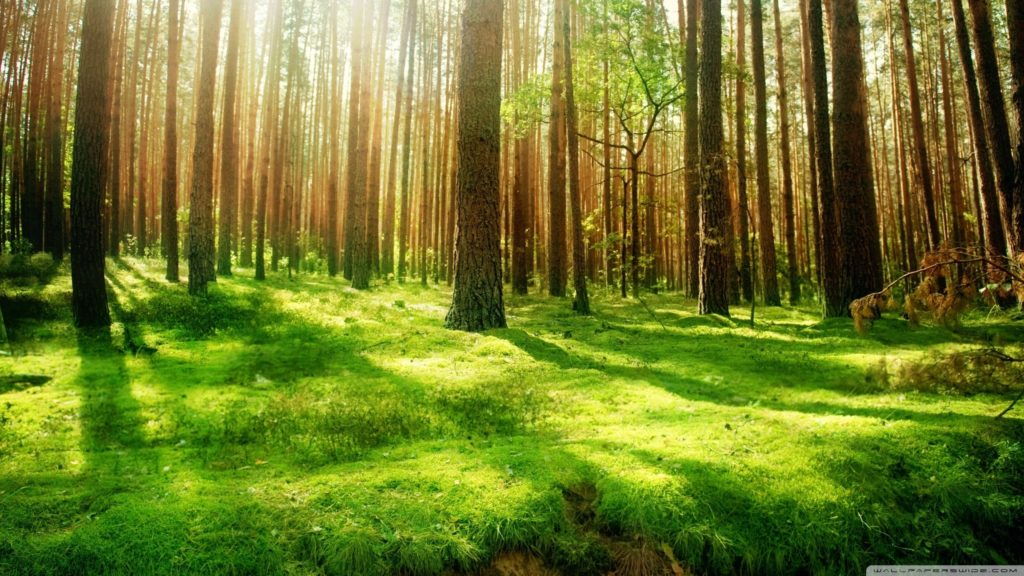 10 Most Popular Beautiful Nature Scenery Wallpapers FULL HD 1920×1080 For PC Background 2018 free download beautiful forest scenery e29da4 4k hd desktop wallpaper for 4k ultra 1024x576