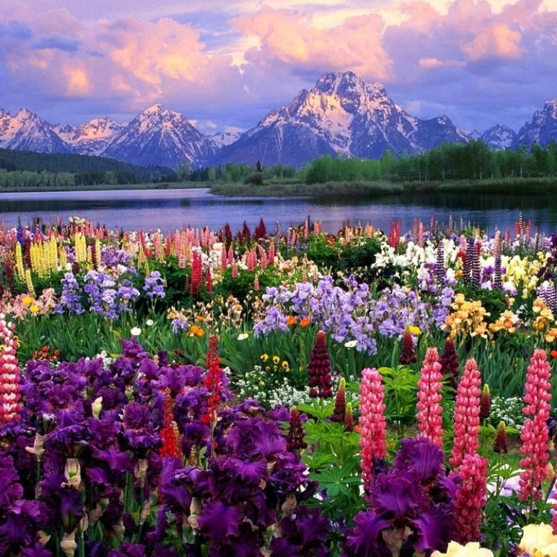 10 Most Popular Field Of Flowers Background FULL HD 1920×1080 For PC Background 2021 free download beautiful landscapes images a view of the mountains hd wallpaper and 800x800