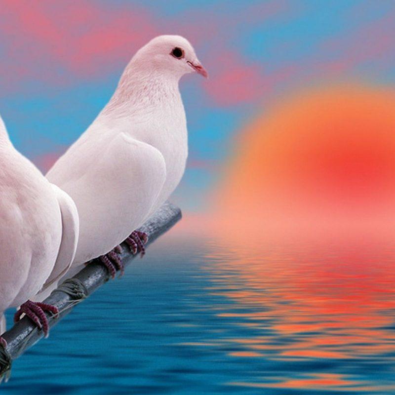 10 New Beautiful Wallpapers Of Love Birds FULL HD 1920×1080 For PC Desktop 2018 free download beautiful love birds pics google search beautiful birds 800x800