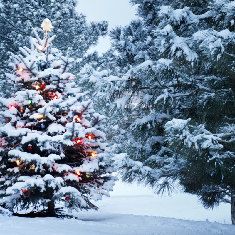 10 Best Christmas Tree Snow Wallpaper Hd FULL HD 1920×1080 For PC Background 2021 free download beautiful outdoor christmas tree e29da4 4k hd desktop wallpaper for 4k 800x800
