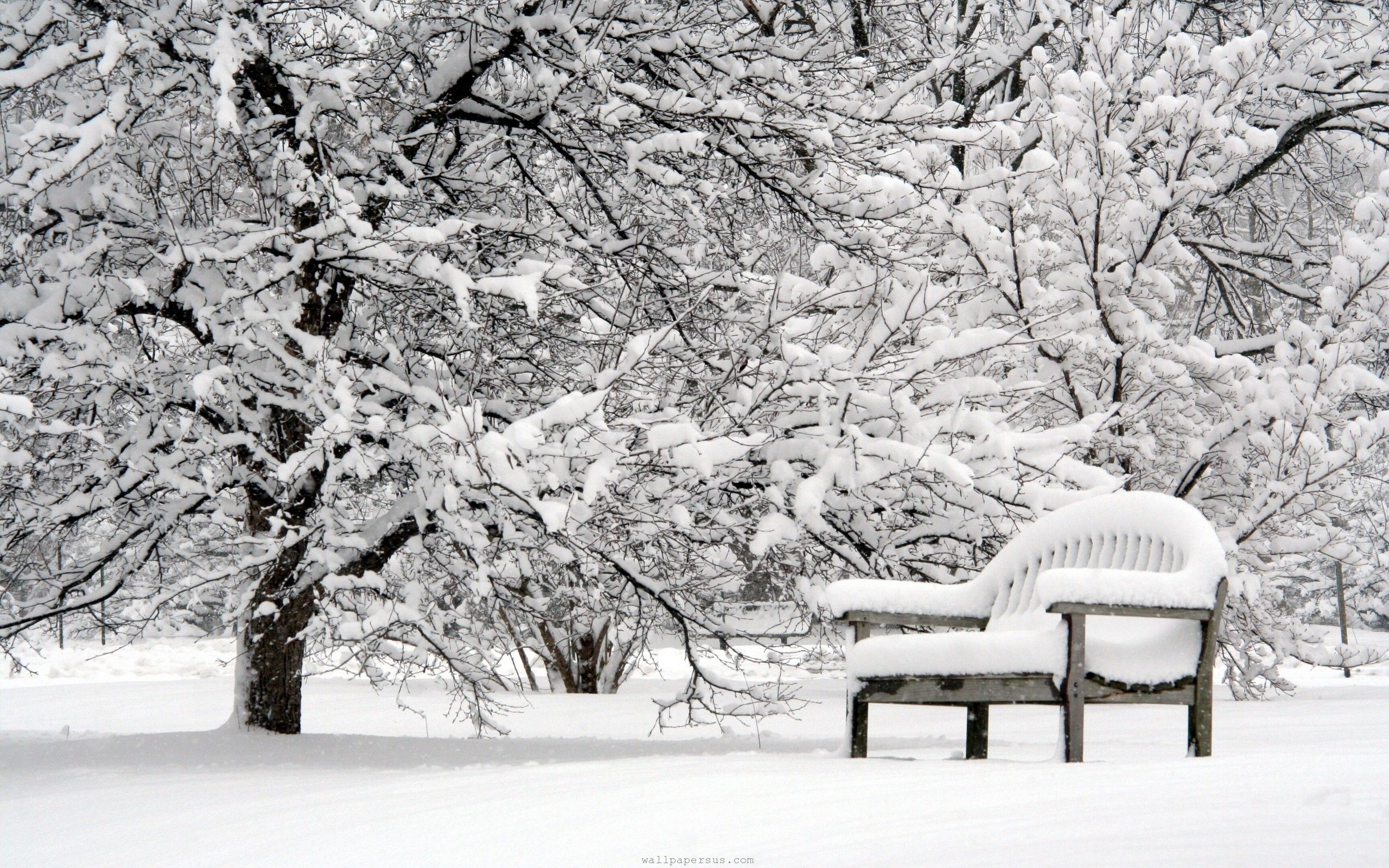 beautiful snow falling pictures*~~* - virtual university of pakistan