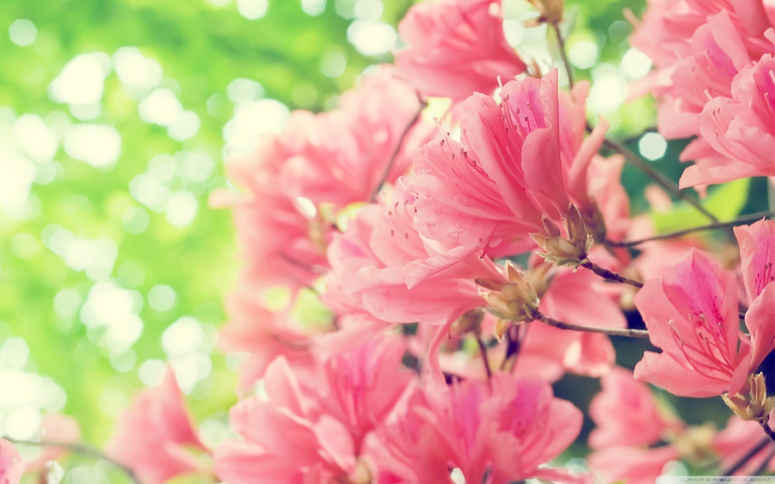 beautiful spring flowers ❤ 4k hd desktop wallpaper for 4k ultra hd