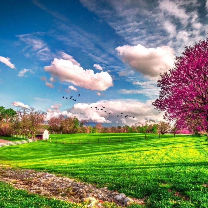 10 New Spring Scenery Wallpaper Widescreen FULL HD 1920×1080 For PC Desktop 2020 free download beautiful spring scenery wallpapers hd 1080p 1920x1080 desktop 03 800x800