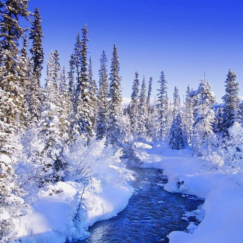 10 Latest Winter Wonderland Screensavers Free FULL HD 1920×1080 For PC Desktop 2021 free download beautiful winter wonderland nature wallpapers pictures just things 800x800