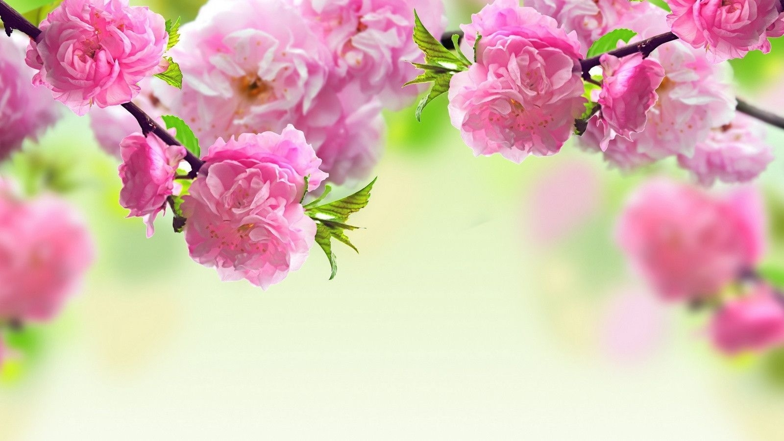 best flower backgrounds for computer high quality spring flowers
