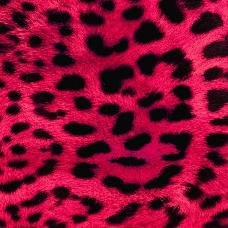 10 Top Leopard Print Wallpaper Hd FULL HD 1920×1080 For PC Background 2020 free download best of animal print desktop wallpaper gallery anime wallpaper hd 800x800