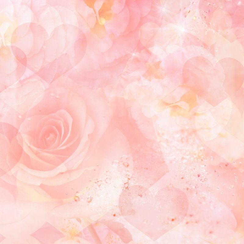 10 New Light Pink Rose Background FULL HD 1920×1080 For PC Desktop 2018 free download best roses background wallpaper high definition high quality 800x800