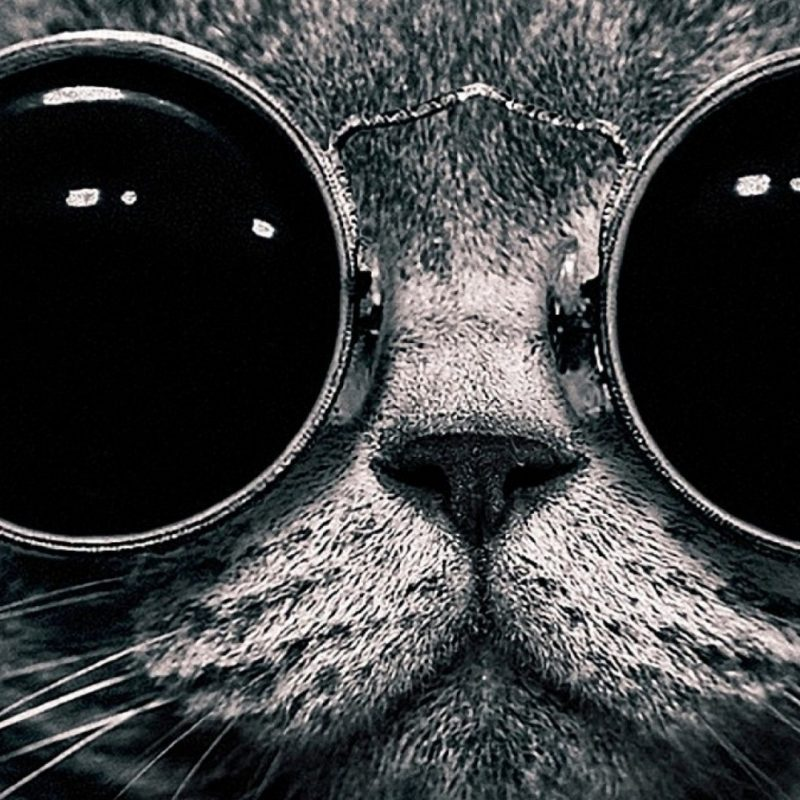 10 Most Popular Black And White 1080P Wallpaper FULL HD 1080p For PC Background 2020 free download big glasses for a cat black and white hd wallpaper 800x800