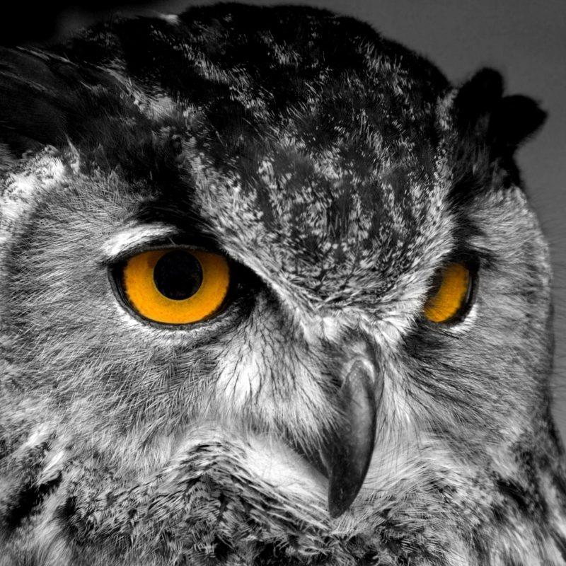 10 Top Owl Desktop Wallpaper Hd FULL HD 1920×1080 For PC Desktop 2018 free download bird animals bird beautiful portrait animal stock owl desktop 800x800