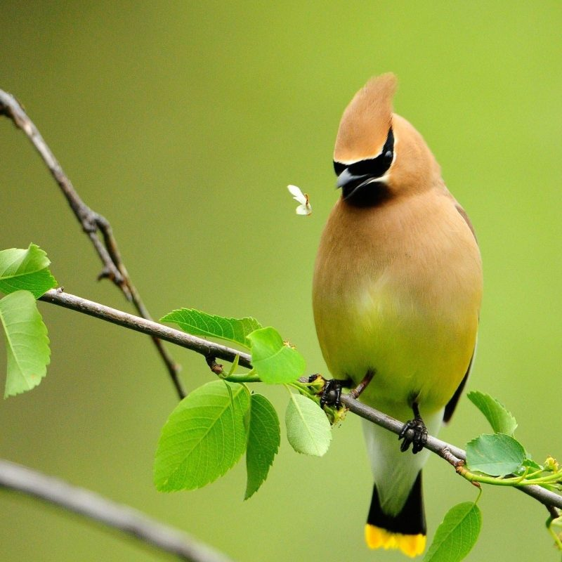 10 Most Popular Birds Full Hd Wallpapers FULL HD 1920×1080 For PC Desktop 2018 free download birds wallpapers wallpaper cave 800x800