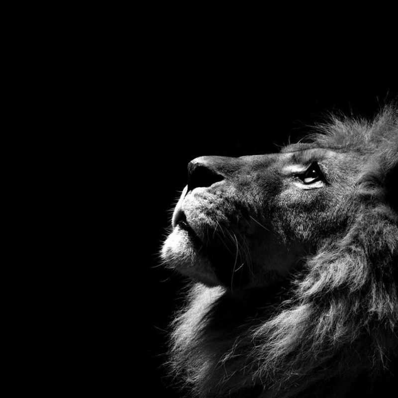 10 Most Popular Black And White Animal Wallpaper FULL HD 1080p For PC Desktop 2018 free download black and white animal photo animals wallpapers latest animals 800x800