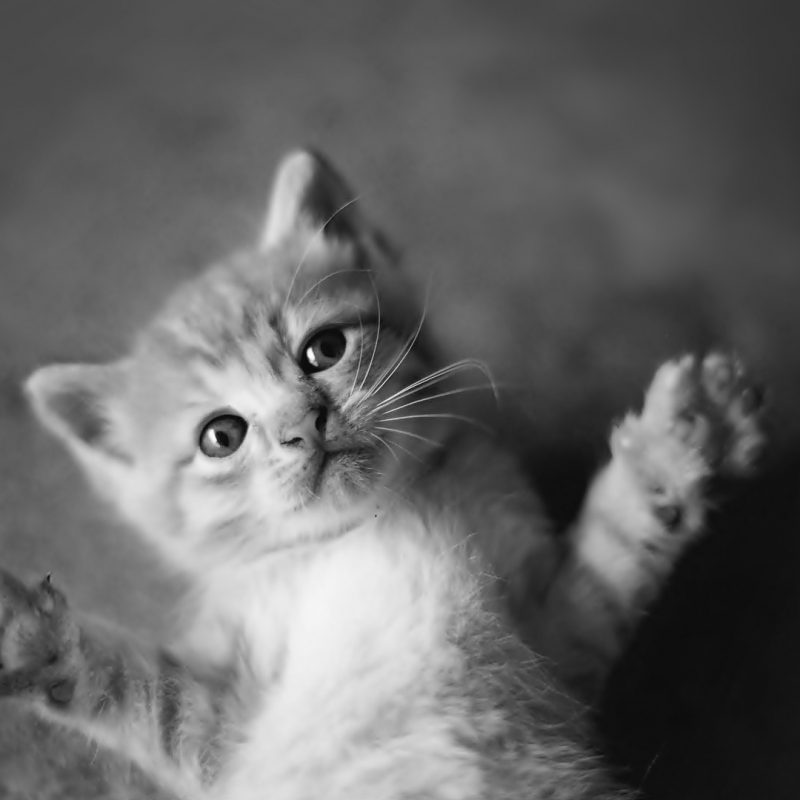 10 New Black And White Cat Wallpaper FULL HD 1080p For PC Desktop 2018 free download black and white cat wallpaper black and white cats wallpaper 800x800