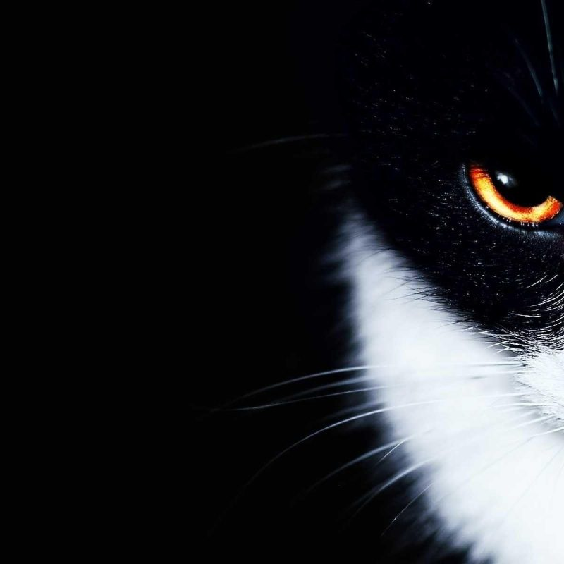 10 New Black And White Cat Wallpaper FULL HD 1080p For PC Desktop 2018 free download black and white cat wallpapers wallpaper cave 1 800x800