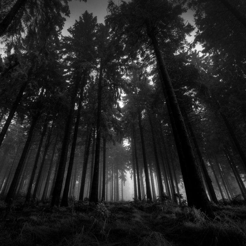 10 Top Forest Wallpaper Black And White FULL HD 1920×1080 For PC Desktop 2018 free download black and white forest 50 best awesome wallpapers 1 800x800