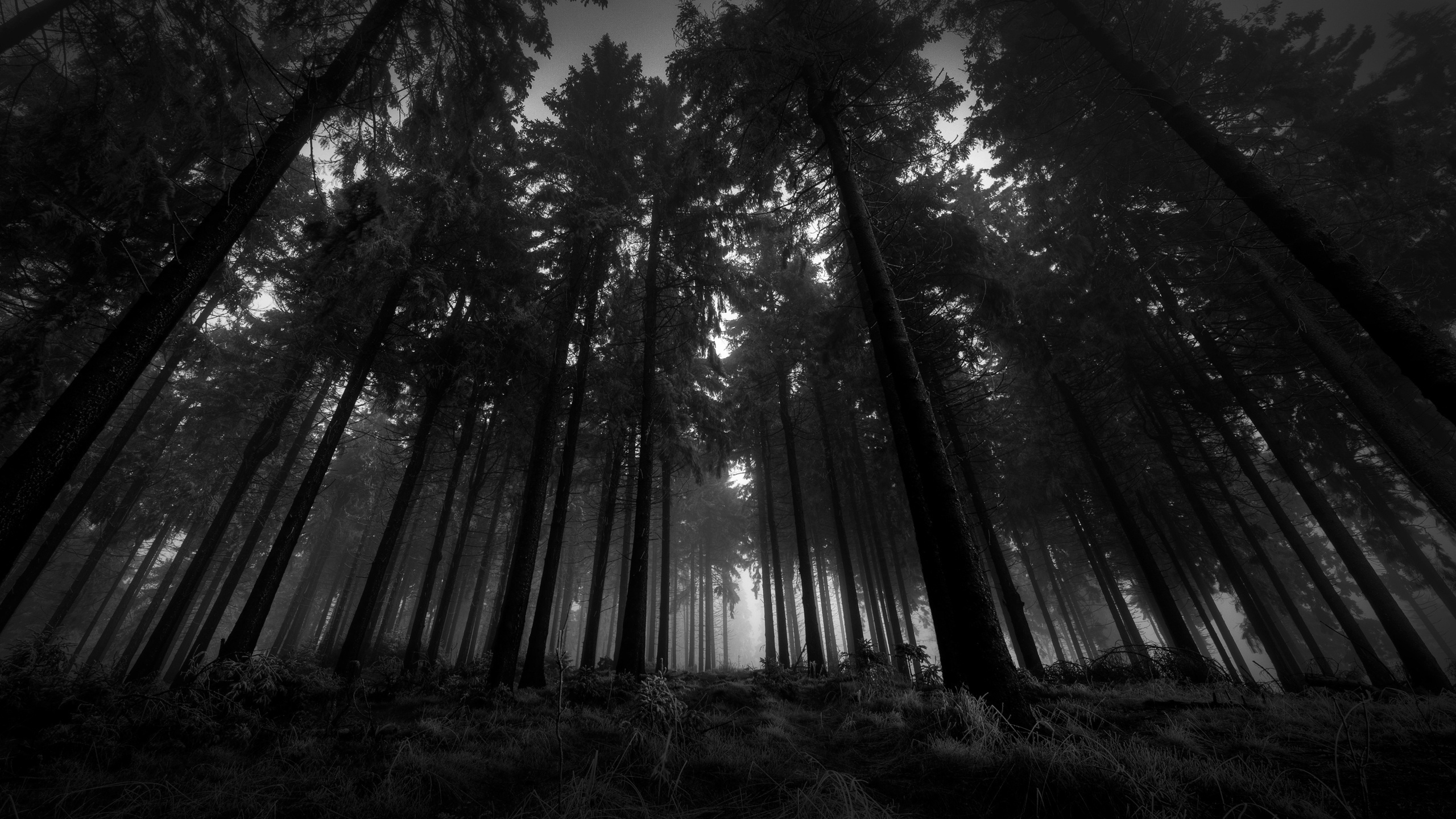black and white forest - 50 best awesome wallpapers