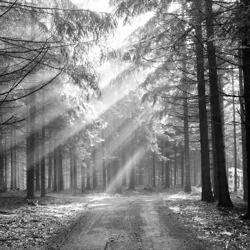 10 Best Black And White Forest Background FULL HD 1080p For PC Background 2018 free download black and white forest images media file pixelstalk 800x800