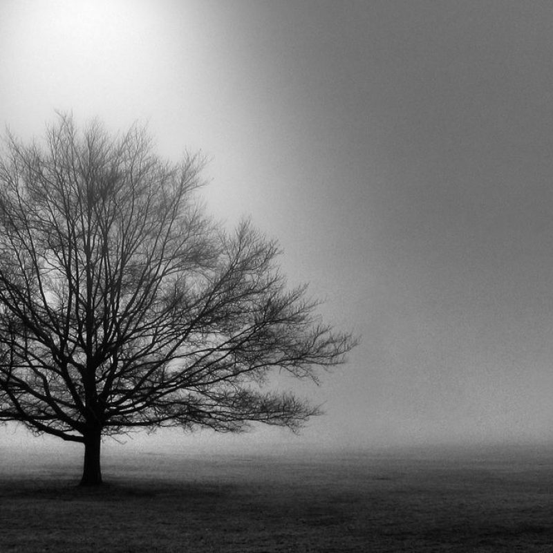 10 Best Computer Wallpaper Black And White FULL HD 1080p For PC Background 2020 free download black and white images of trees 25 desktop wallpaper 800x800