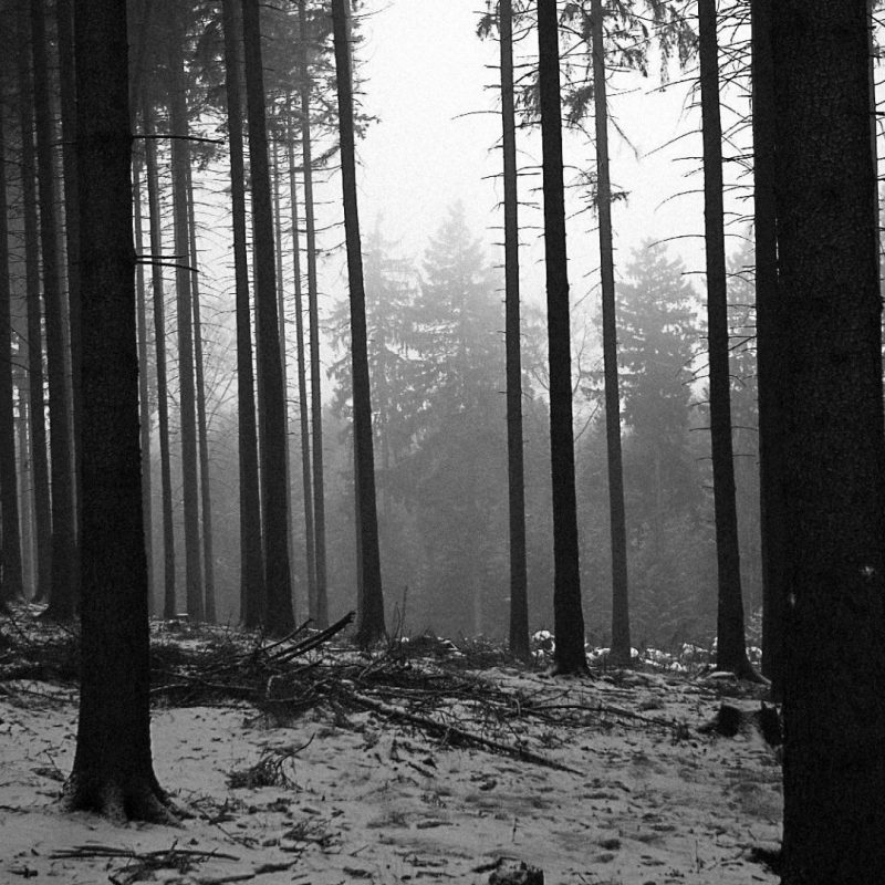 10 Top Forest Wallpaper Black And White FULL HD 1920×1080 For PC Desktop 2018 free download black and white landscapes trees forest monochrome wallpaper 21143 800x800