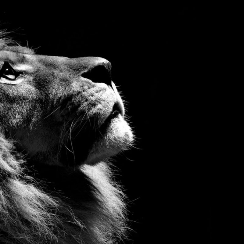 10 New Black And White Wallpaper Desktop FULL HD 1080p For PC Background 2018 free download black and white lion wallpaper hd wallpapers 800x800