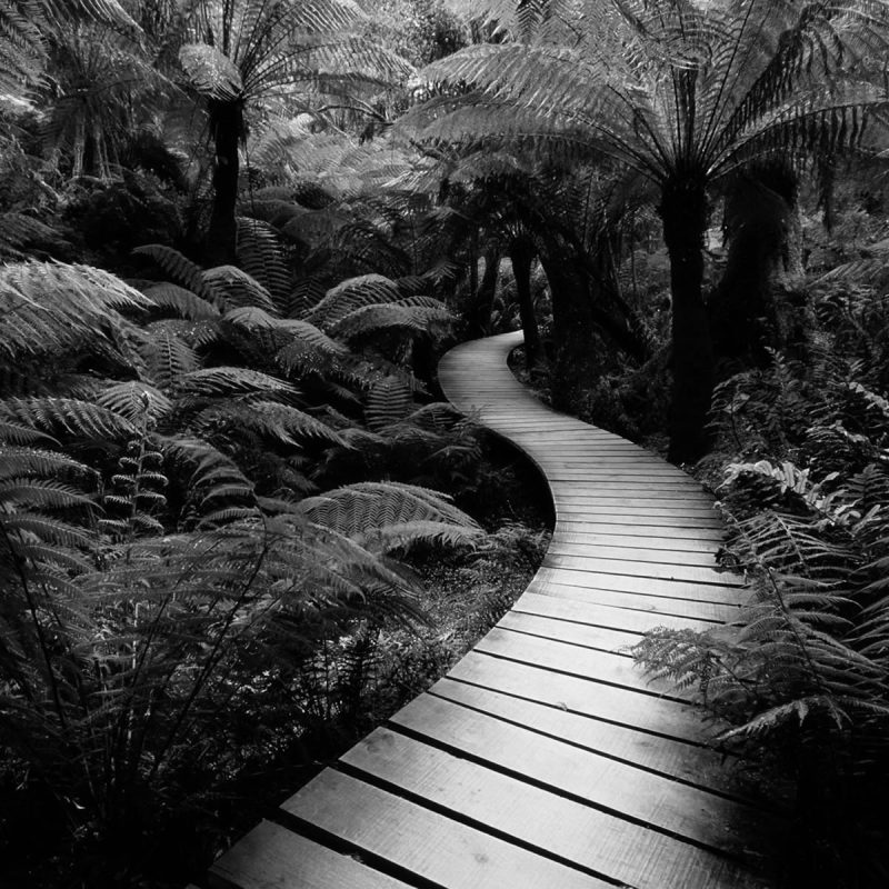 10 Top Pictures Of Nature In Black And White FULL HD 1080p For PC Background 2020 free download black and white nature pictures s loversiq 800x800