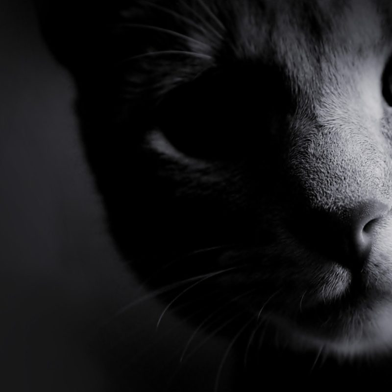 10 New Black And White Cat Wallpaper FULL HD 1080p For PC Desktop 2018 free download black and white photos black and white cats wallpaper black and 800x800
