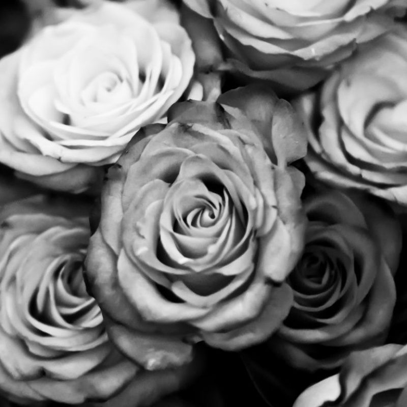10 Best Black And White Roses Wallpaper FULL HD 1080p For PC Desktop 2018 free download black and white rose wallpaper hd background 9 hd wallpapers 1 800x800