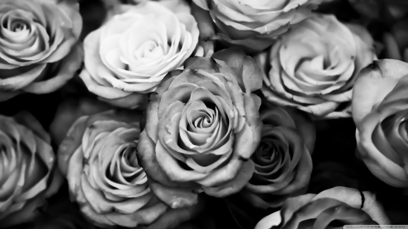 black and white rose wallpaper hd background 9 hd wallpapers