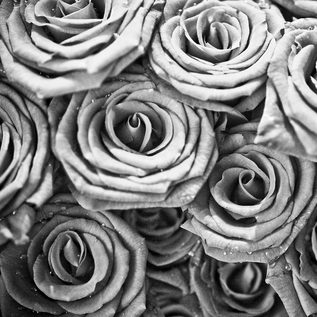 10 Most Popular Black And White Rose Wallpaper FULL HD 1920×1080 For PC Background 2018 free download black and white rose wallpaper