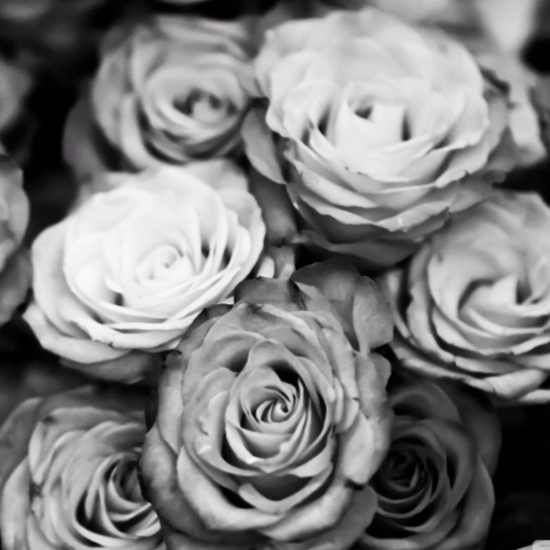 10 Best Black And White Roses Wallpaper FULL HD 1080p For PC Desktop 2018 free download black and white roses wallpaper 4k free 4k wallpaper 800x800