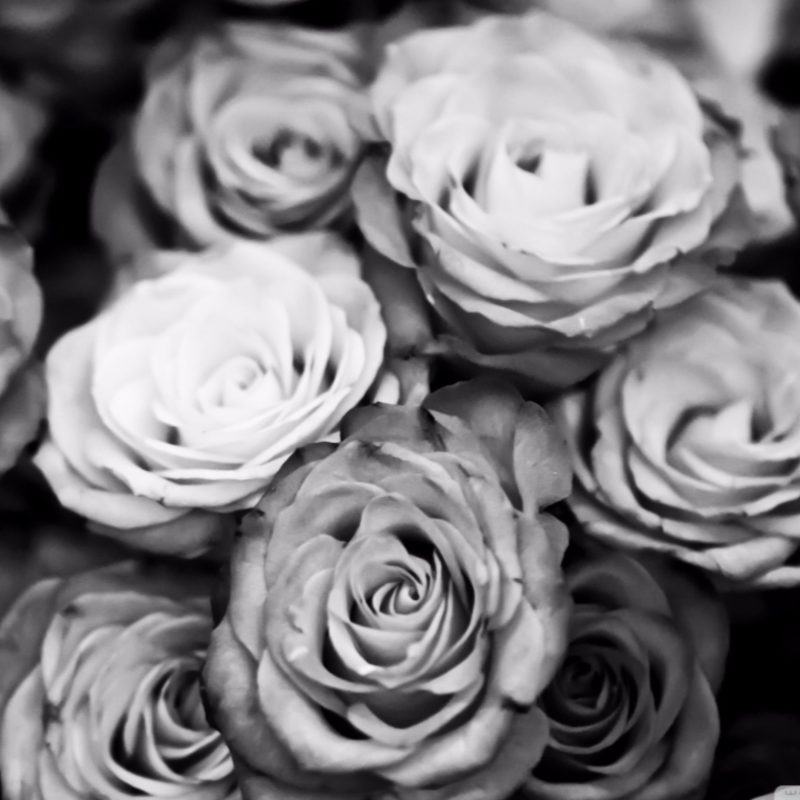 10 Best Black And White Roses Wallpaper FULL HD 1080p For PC Desktop 2018 free download black and white roses wallpaper full hd pics of pc gipsypixel 800x800