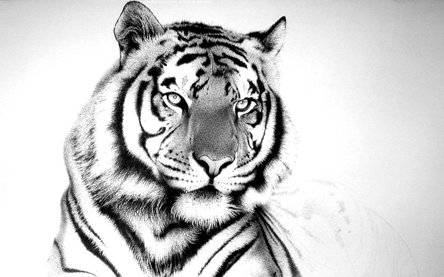 10 Top Black And White Tiger Wallpaper Full Hd 1920 1080 For Pc