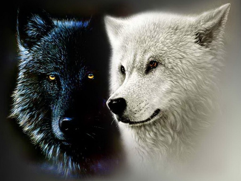 10 Most Popular Black And White Wolf Wallpaper FULL HD 1080p For PC Desktop 2020 free download black and white wolf wallpaper white wolf wallpapers wallpaper 1024x768