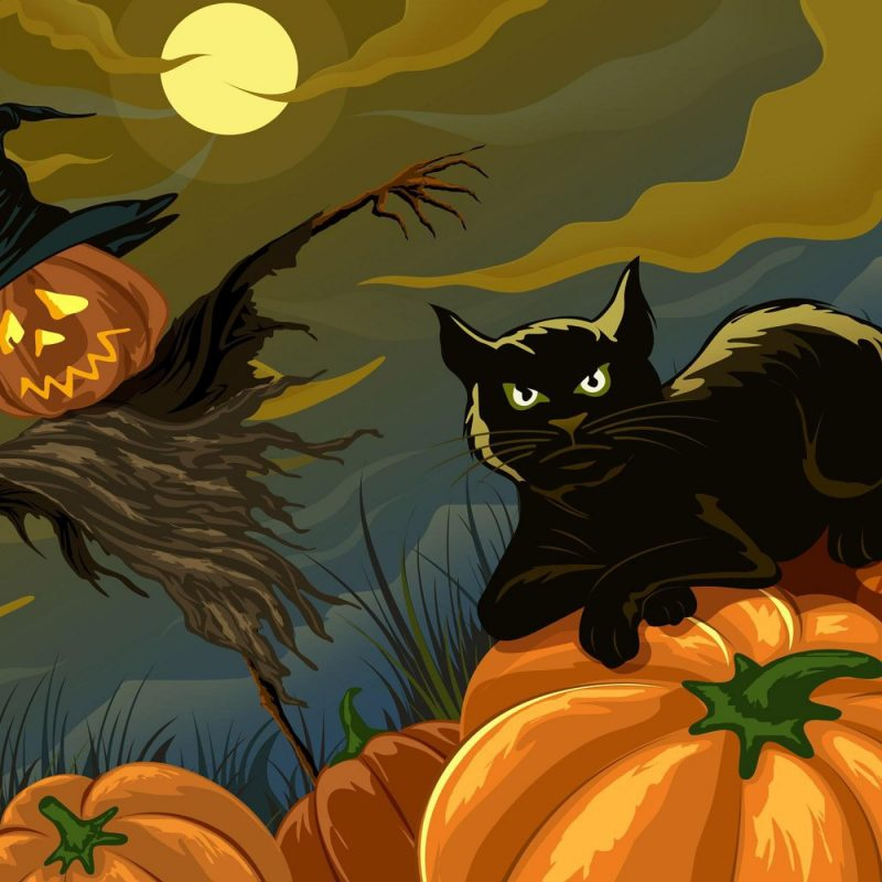 10 New Halloween Black Cats Wallpaper FULL HD 1920×1080 For PC Desktop 2020 free download black cat and scarecrow holiday halloween wallpaper other 800x800