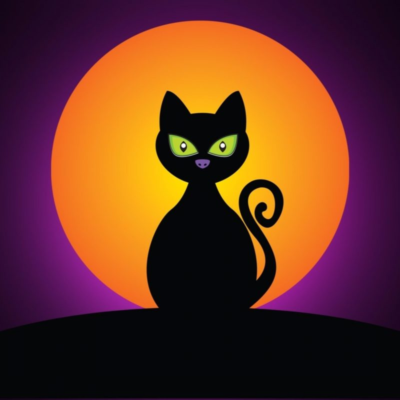 10 New Halloween Black Cats Wallpaper FULL HD 1920×1080 For PC Desktop 2020 free download black cat at night happy halloween 4k wallpapers free 4k wallpaper 800x800