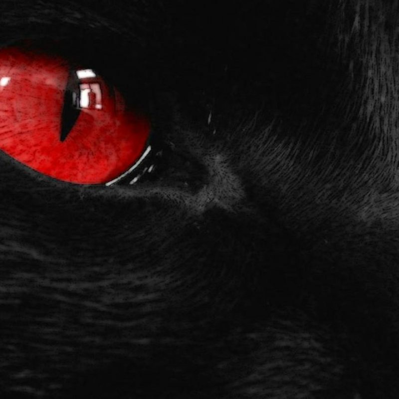10 New Black Wolf With Red Eyes Wallpaper FULL HD 1080p For PC Desktop 2018 free download black cat with red eyes wallpaper latest wallpapers 800x800