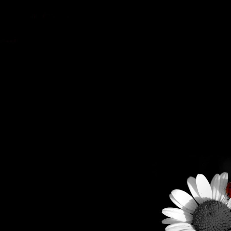 10 New Desktop Background Black And White FULL HD 1920×1080 For PC Desktop 2018 free download black flowers hd 10 background wallpaper hdflowerwallpaper 800x800