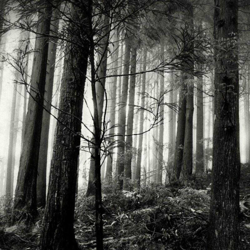 10 Top Forest Wallpaper Black And White FULL HD 1920×1080 For PC Desktop 2018 free download black forest wallpaper desktop and white of laptop hd gipsypixel 1 800x800