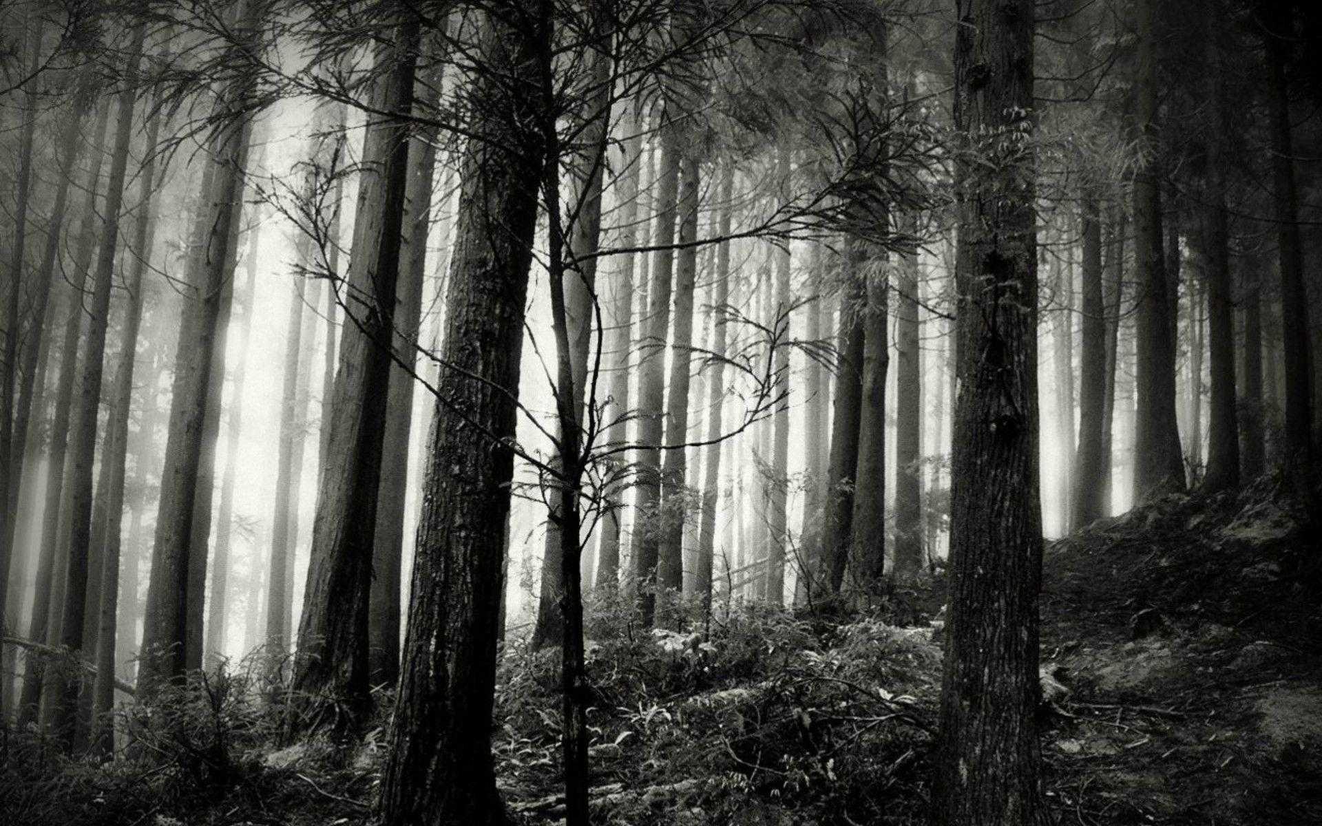 black forest wallpaper desktop and white of laptop hd ~ gipsypixel