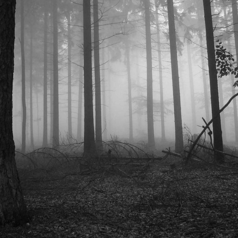 10 Best Black And White Forest Background FULL HD 1080p For PC Background 2018 free download black forest wallpapers wallpaper cave 1 800x800