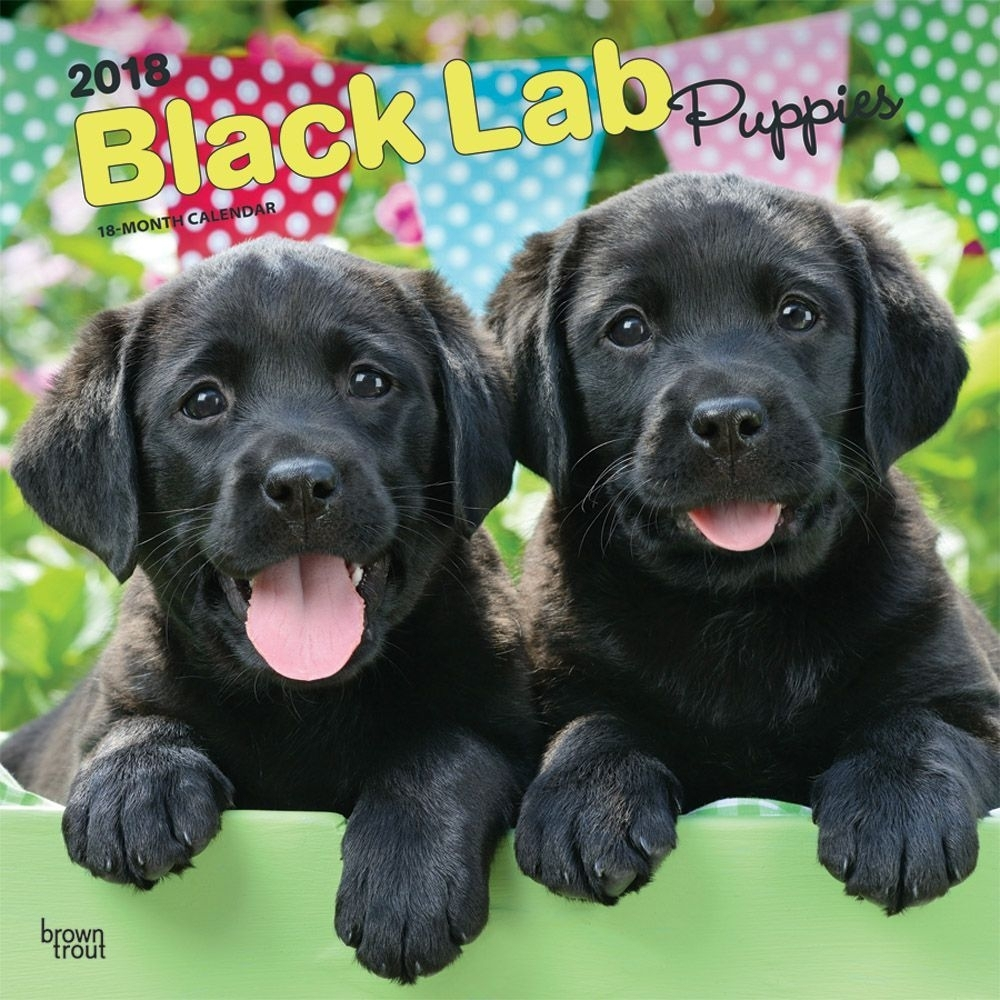 black lab puppies wall calendar 2018 | browntrout | calendars