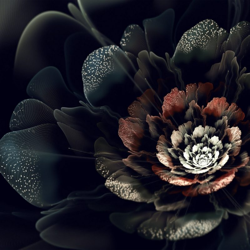 10 Best Black Rose Wallpaper Gothic FULL HD 1920×1080 For PC Background 2018 free download black rose flower wallpaper hd desktop background 800x800