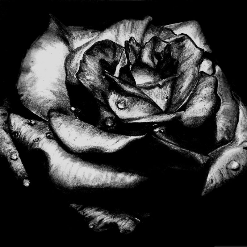10 Best Black Rose Wallpaper Gothic FULL HD 1920×1080 For PC Background 2018 free download black rose gothic picture wallpaper roses pinterest gothic 800x800
