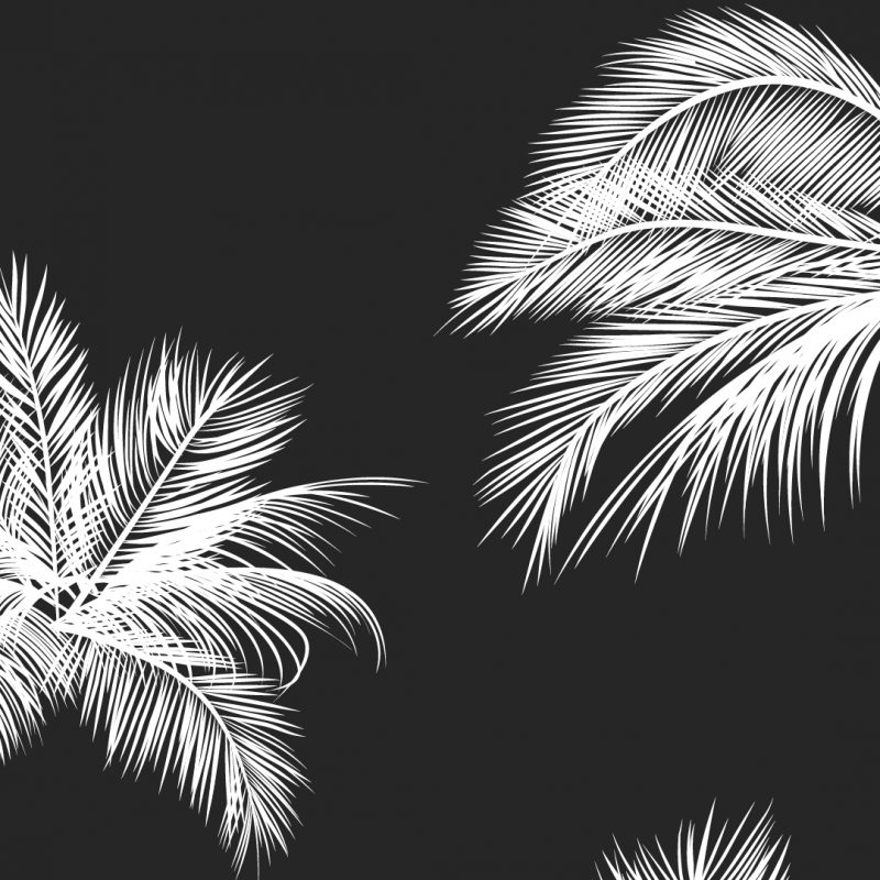 10 Best Cute Black And White Wallpapers FULL HD 1920×1080 For PC Desktop 2020 free download black white palm leaves palm trees like and repin noelito flow 800x800