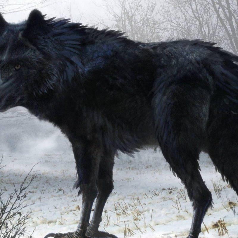 10 best black wolf wallpaper 1920x1080 full hd 19202151080