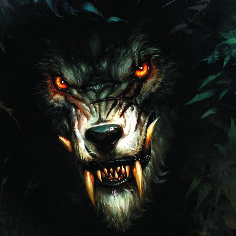 10 New Black Wolf With Red Eyes Wallpaper FULL HD 1080p For PC Desktop 2018 free download black wolf with red eyes google search willies kool shit he 800x800