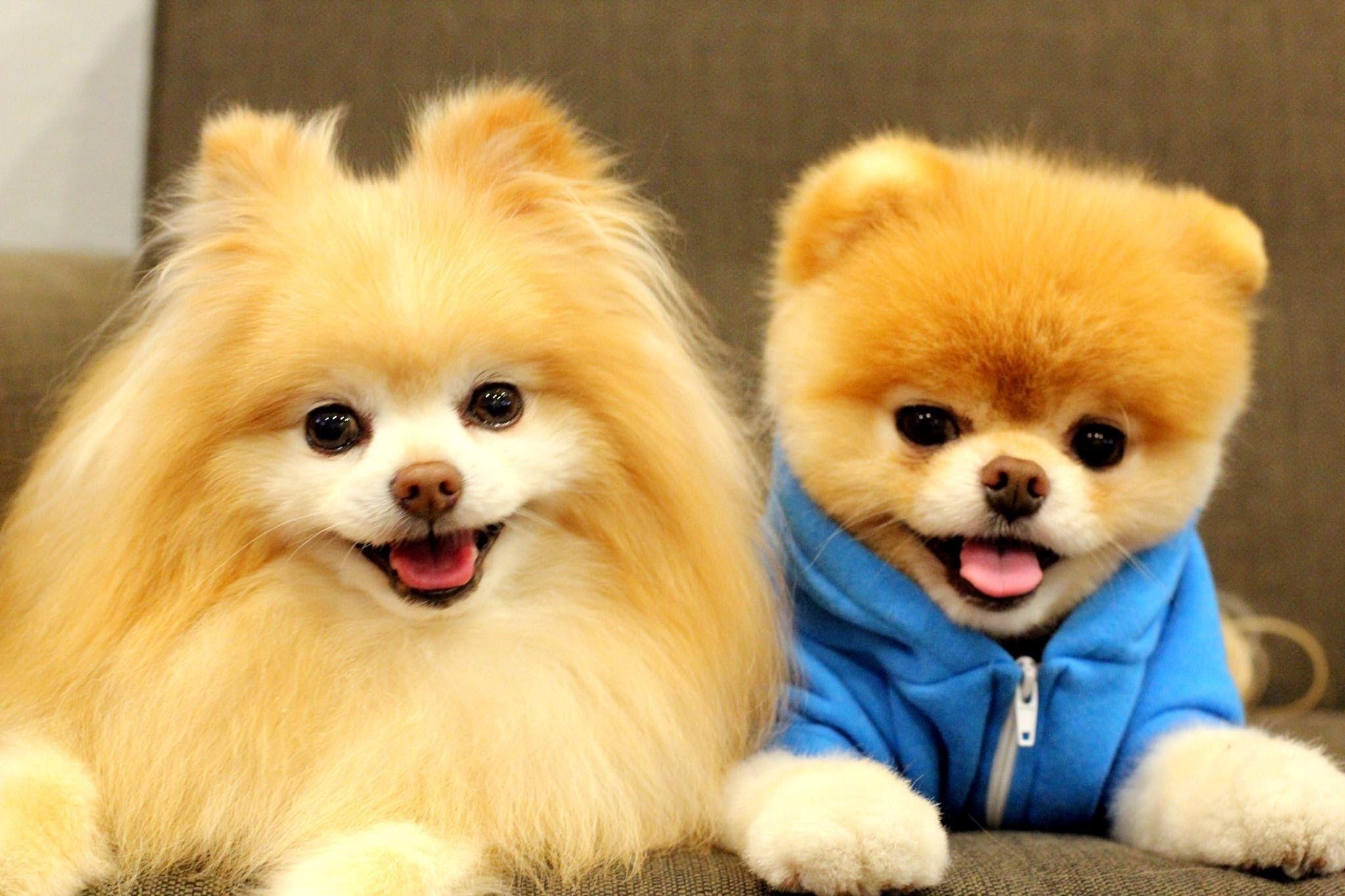 boo cute baby dog hd 2015 - 15 minutes of boo - youtube
