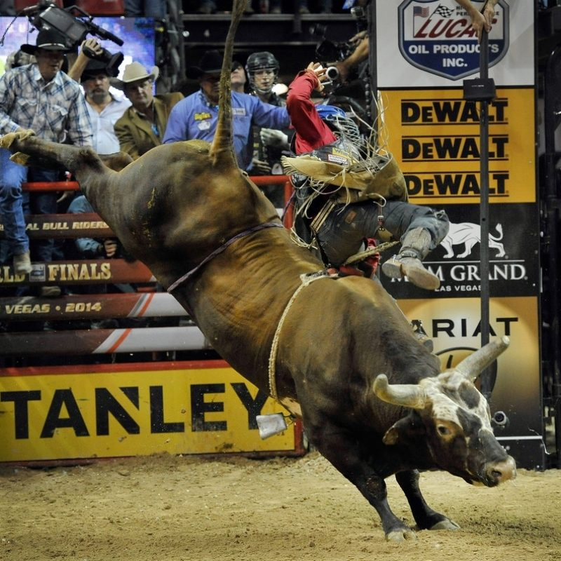 10 Most Popular Professional Bull Riders Inc FULL HD 1080p For PC Background 2018 free download bushwacker photos photos professional bull riders 21st world 1 800x800