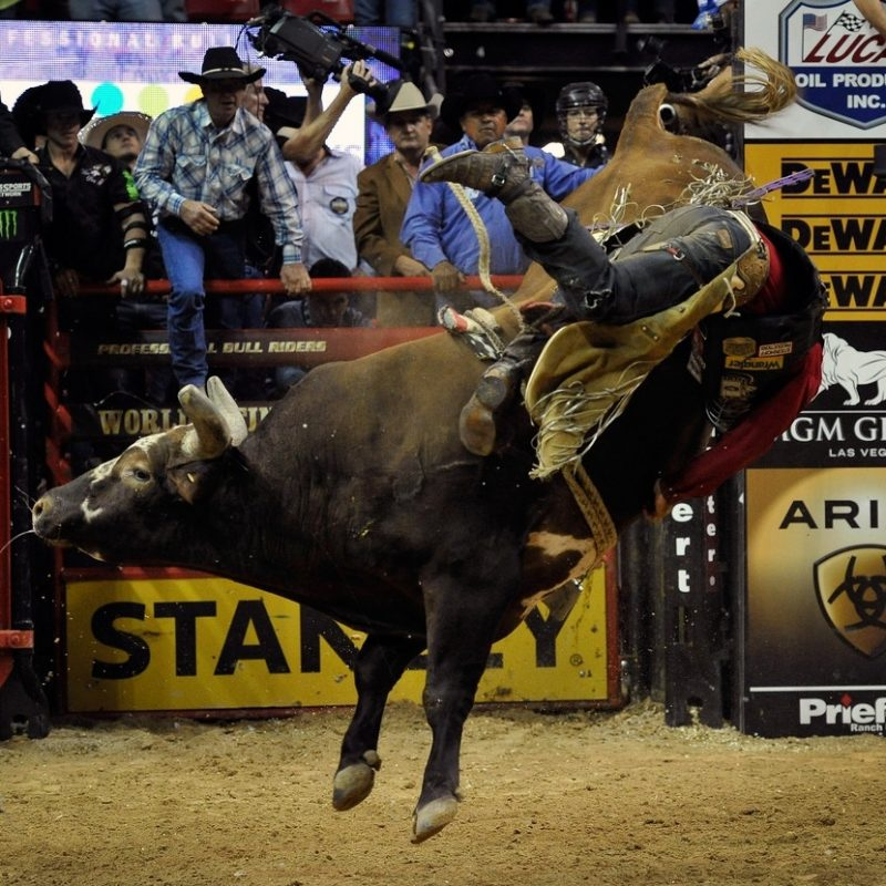 10 Most Popular Professional Bull Riders Inc FULL HD 1080p For PC Background 2018 free download bushwacker photos photos professional bull riders 21st world 800x800