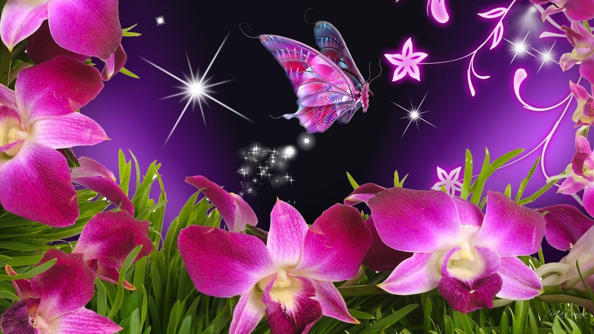 butterflies and flowers | butterfly flowers orchid purple stars