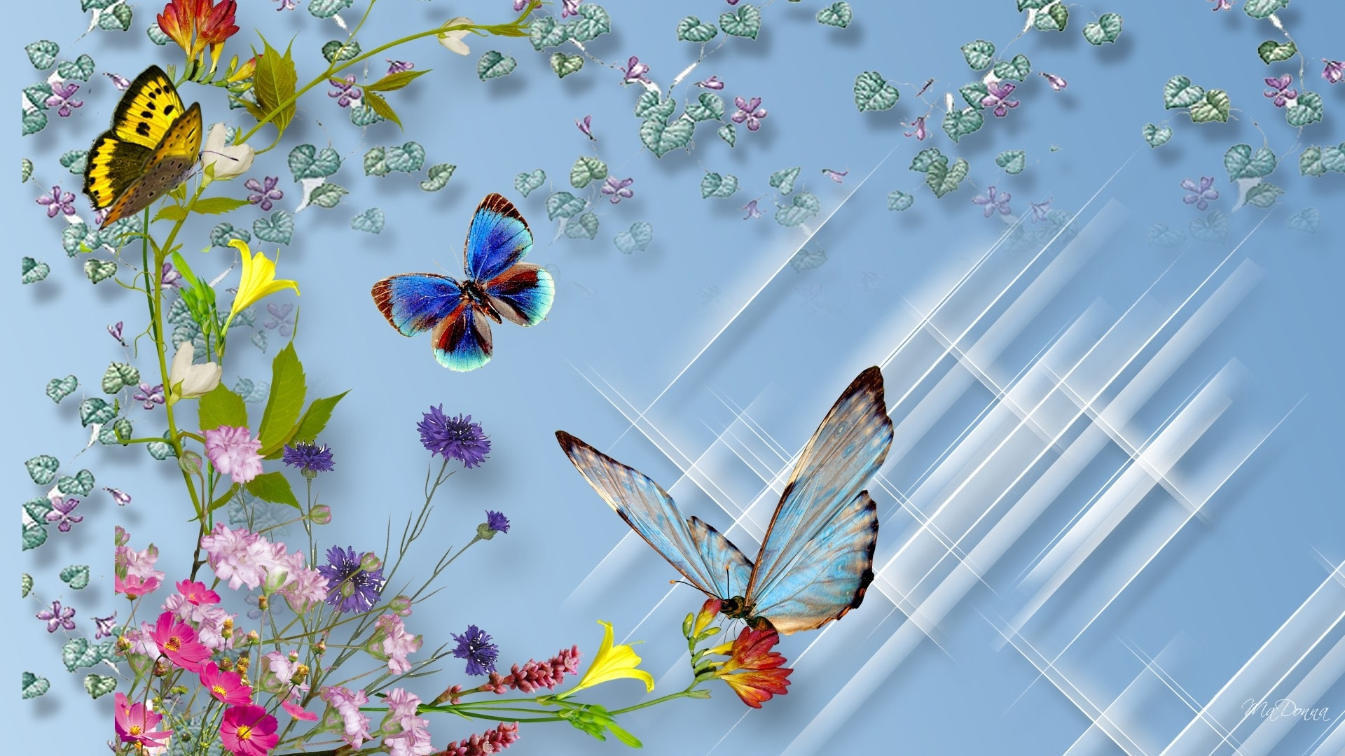 butterflies and flowers full hd wallpaper and background image